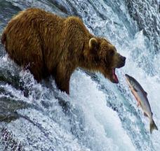 Seafood: Wild-Caught vs. Farm Raised?